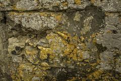 #Cracked wall (aenee) Tags: aenee nikond7100 afnikkor18105mmf3556ed brantome frankrijk vakantiesept2018 dordogne perigord gothique renaissance wall stone steen mos korstmos lichenen lichen pse14 dsc6005 20180913 textures