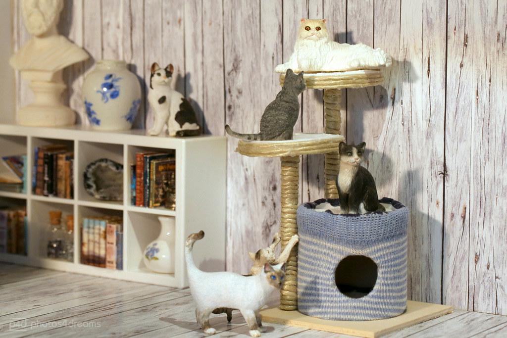 The World S Best Photos Of Cat And Kratzbaum Flickr Hive Mind