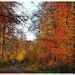 Interlude © En forêt de Verte-4