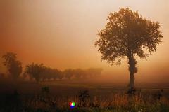 Nella valle (Gianni Armano) Tags: nella valle san bartolomeo alessandria piemonte italia nebbia foto gianni armano photo flickr