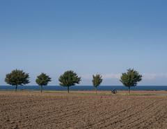 Fünf Bäume vor der Ostsee (Teelicht) Tags: balticsea deutschland germany küste meckpomm mecklenburgvorpommern meer ostsee coast sea