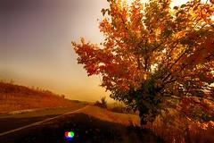 Autunno: l'ultimo sorriso più bello dell'anno (Gianni Armano) Tags: autunno l'ultimo sorriso più bello dell'anno foto gianni armano photo flickr