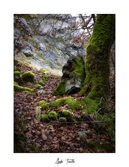 _ATP4650 (anahí tomillo) Tags: nikond7500 sigma1750f28 lightroom paisaje landscape naturaleza nature otoño autunm árbol tree bosque woods
