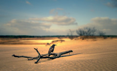 Surreal 3 (Wim Koopman) Tags: bird branch dead sand desert dunes surreal surrealism crow atmosphere mood digita art dutch holland nationalpark flowing glowing