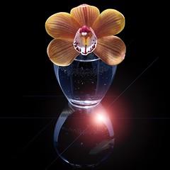 Cymbidium (Pixel Fusion) Tags: nature nikon flora flower aperture macro d600 photoshop cymbidium orchid