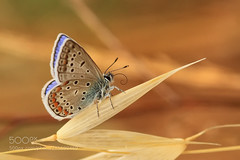 Butterfly (hoangcuongnokia8800) Tags: 500px butterfly macro nature color colorful colours golden gold autumn necdet yasar finike kumluca antalya mediterranean photo photographer photograph photography photos photoshop beautiful beauty