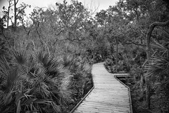 raised walkway, dense vegetation, Atlantic Center for the Arts, New Smyrna Beach, FL, Nikon D3300, Sigma 18-50mm f-2.8 EX DC MACRO, 2.4.19 (steve aimone) Tags: walkway raised boardwalk pathway underbrush vegetation atlanticcenterforthearts newsmyrnabeach florida nikond3300 sigma1850mmexdcmacro monochrome monochromatic blackandwhite landscape