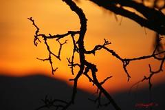 IMG_7617 (Pfluegl) Tags: graz österreich europe europa eu sunset chpfluegl chpflügl christian pflügl sonnenuntergang