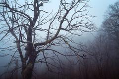 The Dormant (Vladimir Grablev) Tags: appalachian mountains shenandoah fog trees rain overcast nationalpark syria virginia unitedstates us