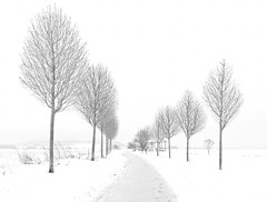 Infinity / Infinidad (toncheetah) Tags: winter snow landscape trees alley path footpath walkway field cold