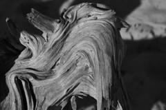 017596 Drift and Flow (David G. Hoffman) Tags: blackandwhite driftwood beach