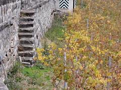 DSCN8098 (keepps) Tags: switzerland suisse schweiz vaud brent fall autumn stairs vineyard