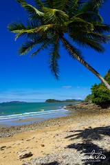 Mission Beach (Theo Crazzolara) Tags: beach missionbeach australia queensland paradise coast vacation highlight perfect sun palm tree palmtree relaxing beautiful lonely sea ocean tropical tropic scenic scenery landscape natural nature