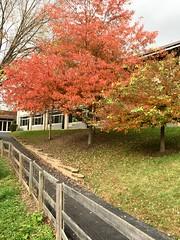 Park School ~ finishing my a.m. walk (karma (Karen)) Tags: parkschool pikesville maryland paths fences trees fallcolor hff