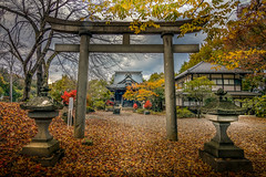 Shrine and gateway (kellypettit) Tags: shrine temple otera ginja fall autumn colours fallcolours autumncolours wideangle kellypettit darkandlight