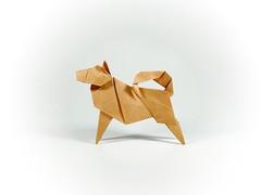 🐶 (guangxu233) Tags: paper art paperart paperfolding fold handmade animal dog origami origamiart 折纸 折り紙 折り紙作品