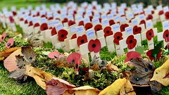 In remembrance (tonypreece) Tags: remembrance cross poppy poppies wwi ww1 world war one fallen autumn leaves soldiers memorial garden red green inremembrance 1914 1918 local people lost loss life sacrifice eastbierley birkenshaw hunsworth drub spenvalley