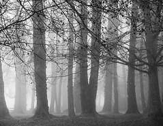 in the still (bluechameleon) Tags: barnetmarinepark sharonwish blackandwhite bluechameleonphotography branches burnaby eerie fog forest landscape mysterious nature tangled trees ngc