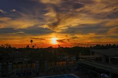 03 (morgan@morgangenser.com) Tags: sunset pretty beautiful red orange colorful evening dusk clouds blue palmtree santamonicacollege smc silhouette sun yellow cool
