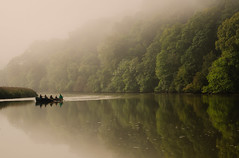 The Turn (suerowlands2013) Tags: rivertamar cotehelequay secornwall mist morning calm tranquil boat rowing gig reflections autumn trees nationaltrust