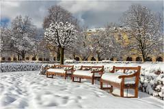 Hofgarten in München (Janos Kertesz) Tags: münchen munich bavaria bayern hofgarten winter snow tree season cold nature white ice park bench sky outdoor