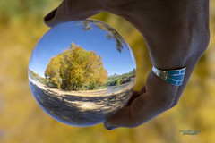 on the river bank (mariola aga) Tags: arizona river riverbank shoreline trees autumn yellow leaves sand crystalball glass ball reflection refraction upsidedown blue sky landscape fantasticnature