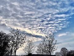 #Abendhimmel im Jänner #2019 (RenateEurope) Tags: weatherphotography skyscape clouds renateeurope iphoneography nrw rheinland germany abendhimmel 2019