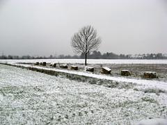 Gott lob, es flieht die dunkle Nacht (amras_de) Tags: sylterstrase wiesbaden dotzheim sauerland schnee snow lumi nix snø sneeu nieu snijeg neu sníh sne nego nieve elur neige sneachta hó snjór neve schnéi sniegas sniegs sneeuw nèu snieg zapada nivi snaw sneh sneg snö kar winter hibierno zima hivern vinter vintro invierno talv negu talvi hiver geimhreadh tél vetur inverno hiems wanter žiema ziema ivèrn iarna mmernu kis