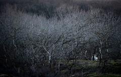 20190114-0909-14 (Don Oppedijk) Tags: vogelenzang noordholland nederland nl amsterdamsewaterleidingduinen awd cffaa fallowdeer damhert