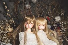 rin and momo (T e s l a) Tags: volks sd10 megu f01 foursisters rosenlied holidays child mignon sd msd bjd balljointdoll balljointeddoll photography