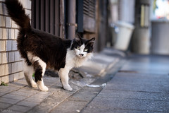 猫 (fumi*23) Tags: ilce7rm3 sony street sel85f18 katze gato neko cat chat a7r3 animal alley emount fe85mmf18 feline 85mm bokeh dof ねこ 猫 ソニー