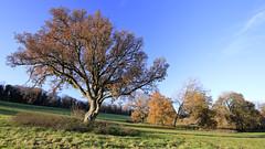 Kilmeston Down II (david.hogan7) Tags: kilmeston down warnford meon valley south downs way exton early light autumn colours fields trees shadows blue sky landscape national park sunshine november morning