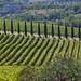 #Ciao bella Toscana#