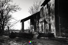Gelsi morti (Gianni Armano) Tags: gelsi morti foto gianni armano photo flickr località pollastra alessandria piemonte italia