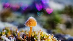 Magical - 6320 (ΨᗩSᗰIᘉᗴ HᗴᘉS +37 000 000 thx) Tags: magic magical heart bokeh macro fungus mushroom sony color belgium europa aaa namuroise look photo friends be wow yasminehens interest eu fr greatphotographers lanamuroise flickering
