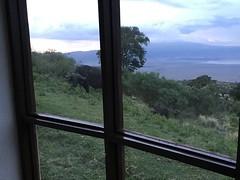 Ngorongoro Crater Sopa Lodge View from Room (Everyday Glory!!!) Tags: ngorongorocrater ngorongoro africa tanzania wildlife gamedrive safari lakemagadi africanbuffalo buffalo capebuffalo