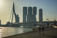 Netherlands - Rotterdam - Waterfront 02_DSC8894 (Darrell Godliman) Tags: netherlandsrotterdamwaterfront02dsc8894 officeformetropolitanarchitecture derotterdam skyscraper erasmusbridge erasmusbrug city cityscape rotterdam netherlands holland europe oma