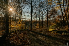Somewhere, near the 50th North // (Crofter's) Tags: autumn autumn2018 autumncolors autumnafternoon sun sunrays shadows shadowoftheday shadow lake landscape lights colors 50° north 50thnorthparallel leaves forest wood trees tree sony sonyalpha sonya77ii sony77ii sonyalpha77ii sony1650 sony1650mm crofterspictures walk walkingthroughtheforest november november2018 diaphragm