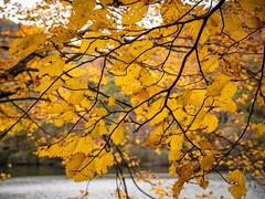20181104-160433-036 (JustinDustin) Tags: 2018 attraction autumn blairsville fall ga georgia nga northamerica northgeorgia seasonal us usa unitedstates vogelstatepark year