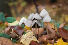 Somewhere in the middle of nowhere (michael_hamburg69) Tags: germany deutschland wald herbst laub laubfärbung november fall autumn pilz pilze fungus mushroom phototourmit3daybeard3tagebart herbstlaub autumnfoliage