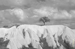 A tree (alexey & kuzma) Tags: tree mountain turkey cappadocia samsung gx20 pentax landscape monochrome