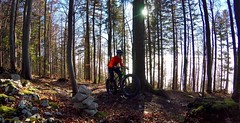 Root Hopping (29in.CH) Tags: fall autumn fatbike ride 16112018