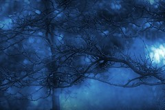 noir blue (mainesandy) Tags: bokeh trees light nature moody altered pse9