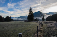Early morning (peter-goettlich) Tags: frost reif bayern bavaria november fog nebel tree baum petern jachenau bayerischevoralpen germany deutschland alps alpen mountains berge forest wald wiese grassland