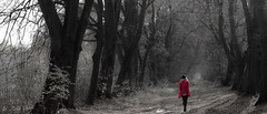 walking into the forest... (illus00) Tags: wood red girl forest dark bw trees walk