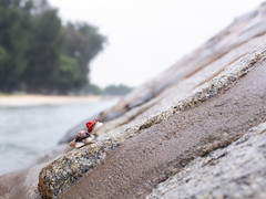 Toy tortoise in red hat climbing up slope in beach (DanliePhoto) Tags: analogy beach climbing copyspace dfficulty doonesutmost effort exert forward funny groin groyne inspiring nature overcome redhat rock rocky sands sandy sea slope struggle tortoise toy toytortoise turtle up water