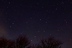 Ursa Major above some trees (louisarobinson7) Tags: sky stars astrophotography ursamajor theplough bigbear constellation wintersky urbansky lightpollution night