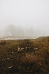 3055 - Resti nella nebbia (matteoguidetti) Tags: nebbia moody fog mist atmosfera cupo lugubre resti fiume river trees nature winter inverno colori cold landscape