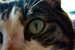 IMG_1786 (bbrasgalla) Tags: cat eye cateye yesfilter meow
