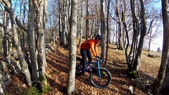 Tree Slalom (29in.CH) Tags: fall autumn fatbike ride 15112018 trees